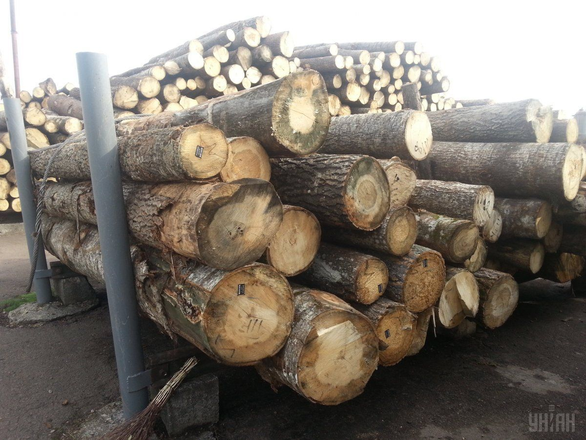 Порог уголовной ответственности за незаконную вырубку лесов сниженпочти в 50 раз / фото УНИАН