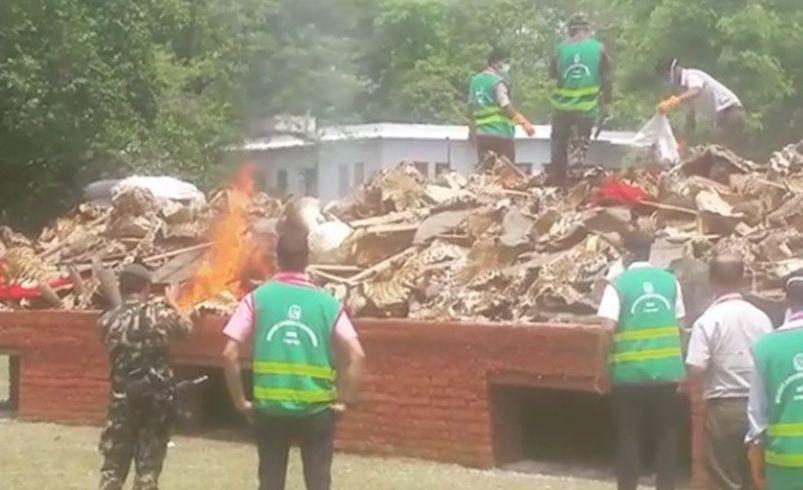 Части тел животных ценны только тогда, когда звери живы - с таким посланием власти Непала уничтожили шкуры и кости / Фото twitter.com/SonamTaC
