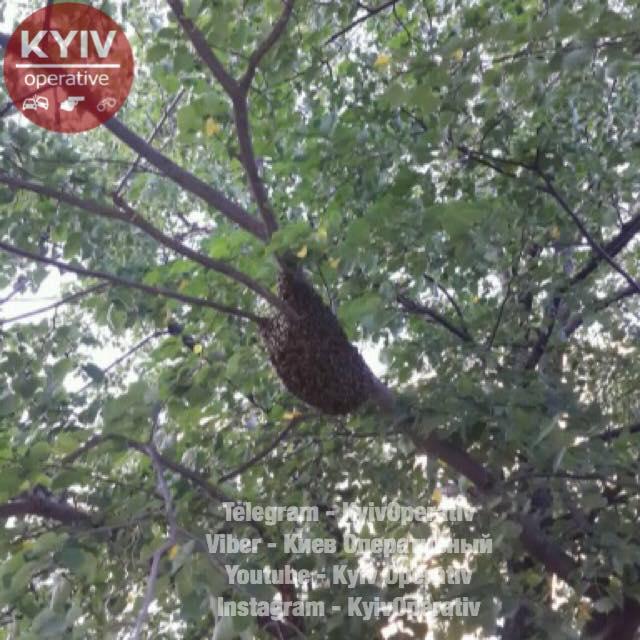 Бджолиний рій налякав мешканців столиці  / facebook.com/KyivOperativ