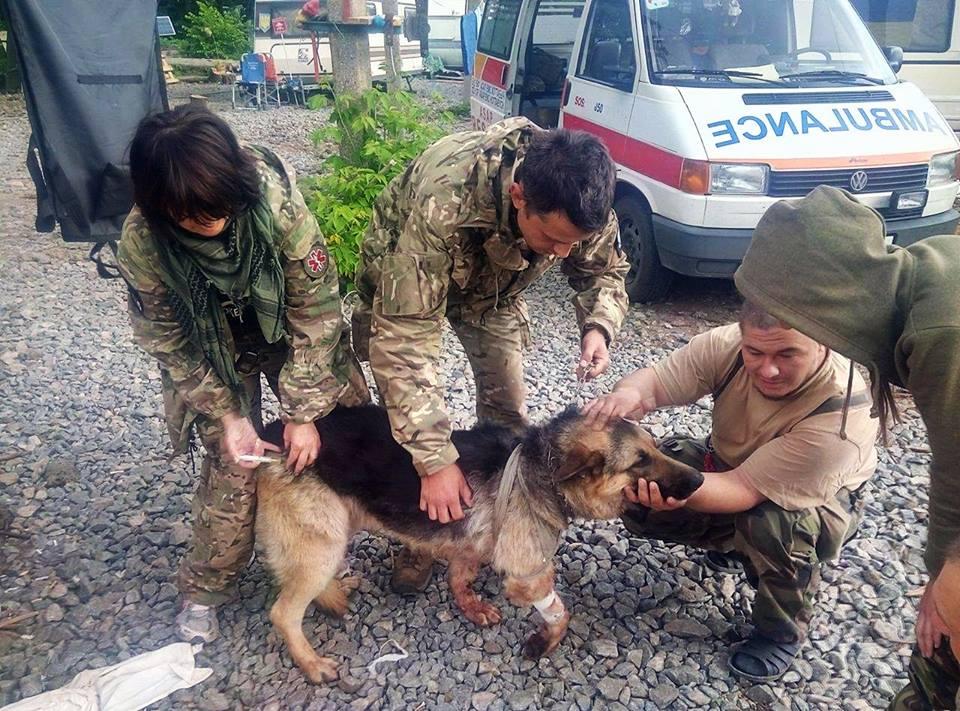 Взоне АТО пёс пожертвовал собой, чтобы спасти бойцов