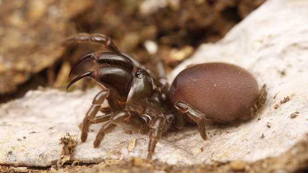 На Дніпропетровщині завелися павуки-птахоїди