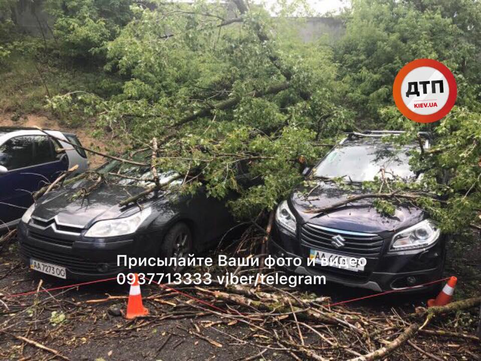 Дерево впало на припарковані машини / фото: dtp.kiev.ua