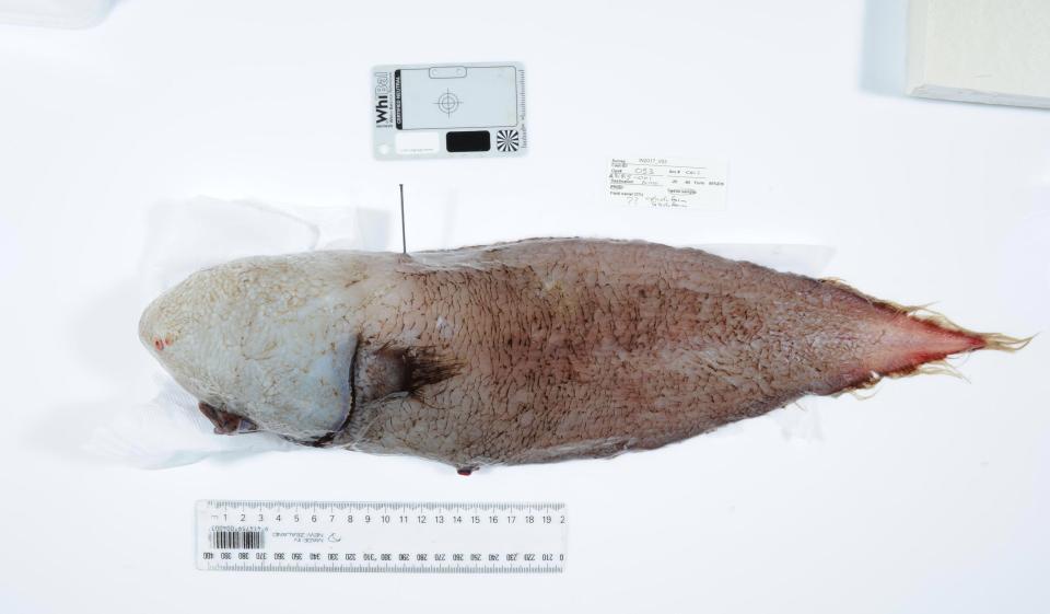 Рыба была выловлена на глубине около четырех километров / the sun.co.ru