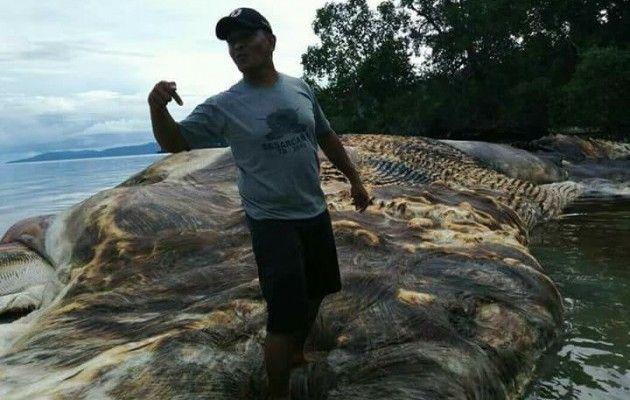 В Індонезії на берег викинуло 35-тонну морську істоту