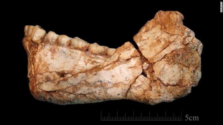 Виявлені скам'янілості, в тому числі частково черепа і нижної щелепи / фото cnn.com