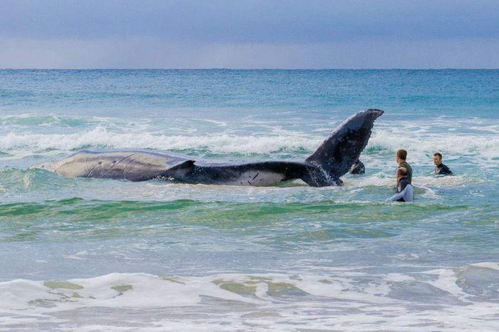 Ученые считают, что этот молодой кит / Kathryn Maxfield