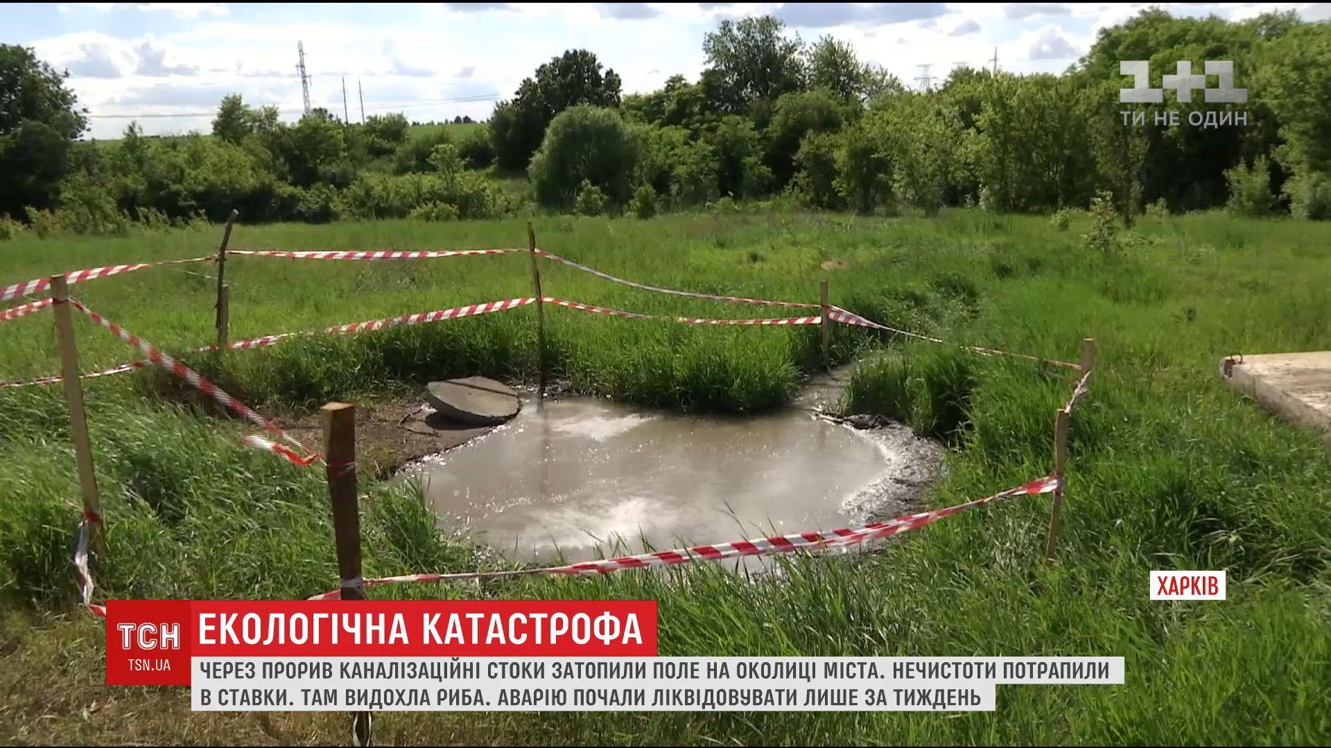 Через прорив каналізації у Харкові нечистоти забруднили поля та ставки / скріншот відео