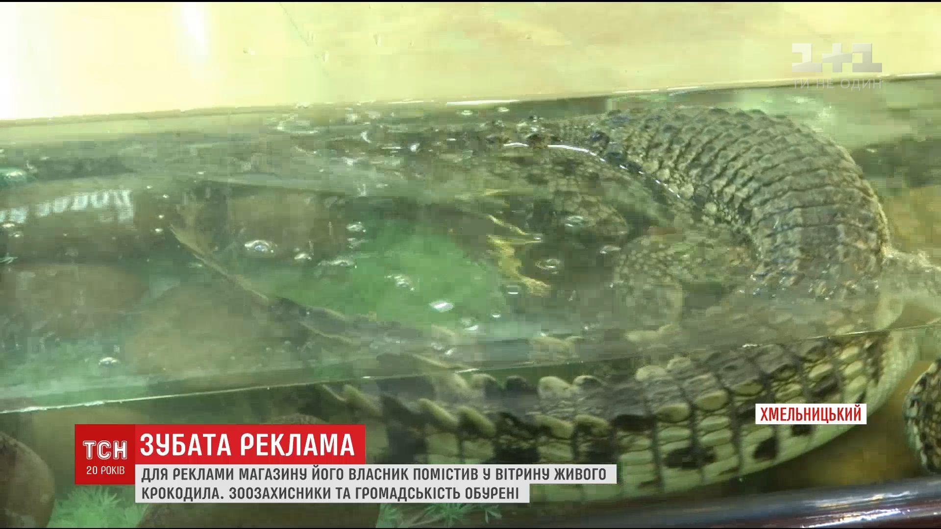 Кадр з відео ТСН