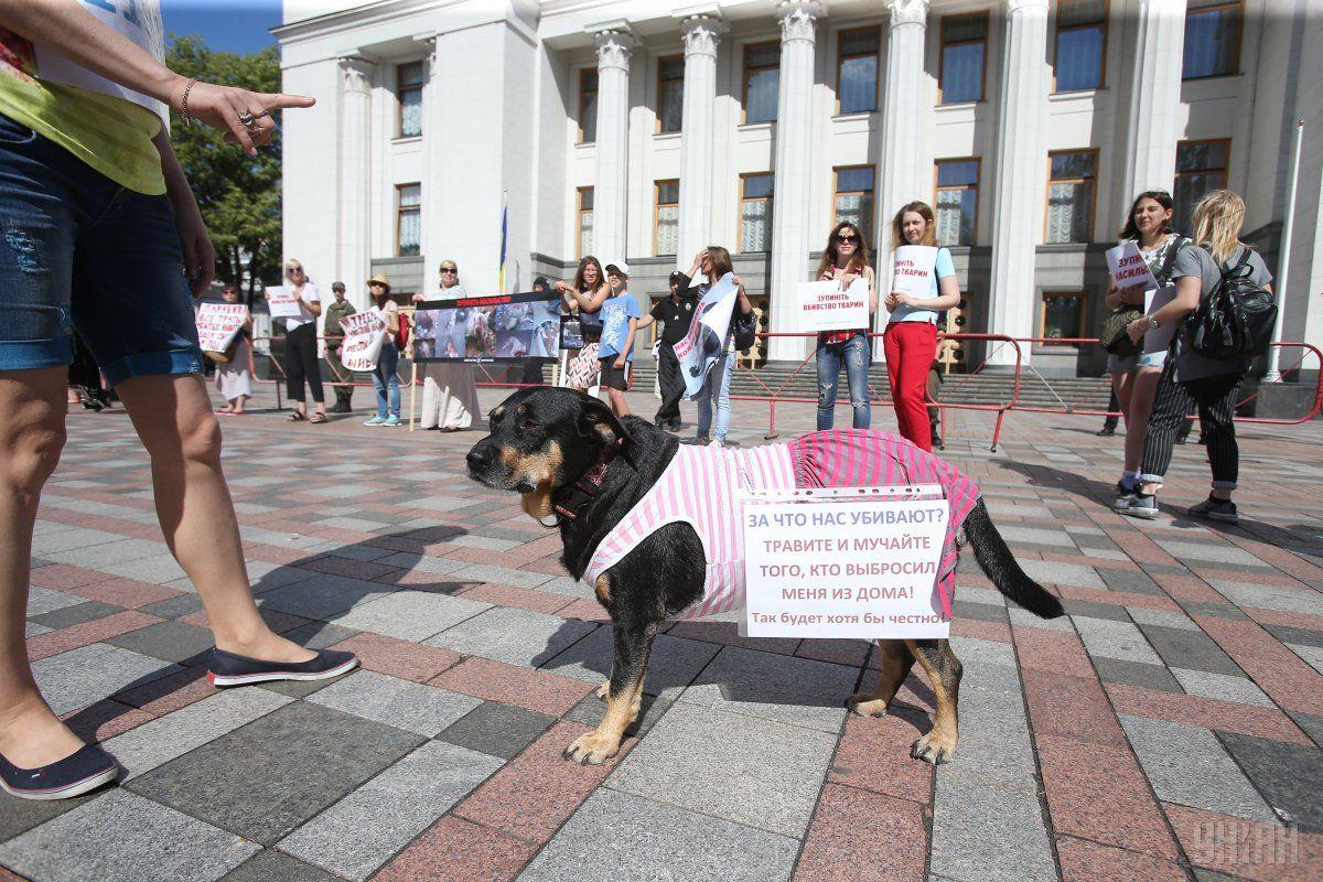 ВР посилила адміністративну та кримінальну відповідальність за жорстоке поводження з тваринами / Фото УНІАН