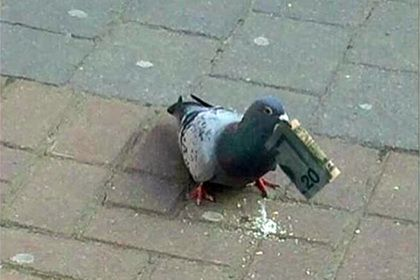 У мережі позаздрили голубу, який раптово розбагатів