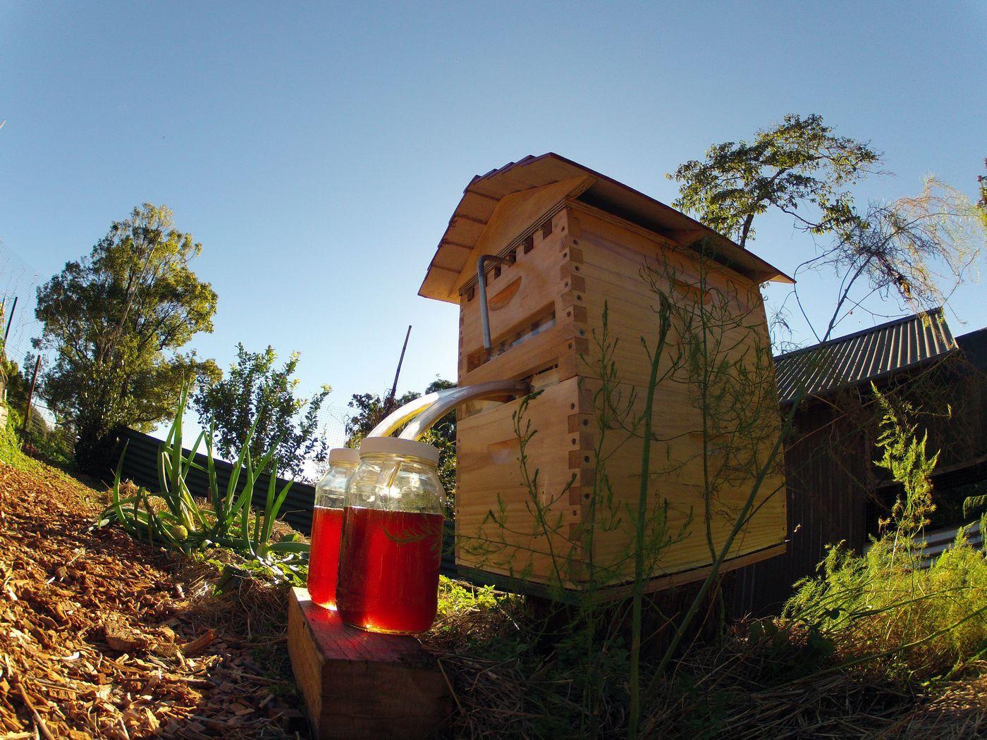 Винахід століття: австралійці придумали вулик, з якого тече мед