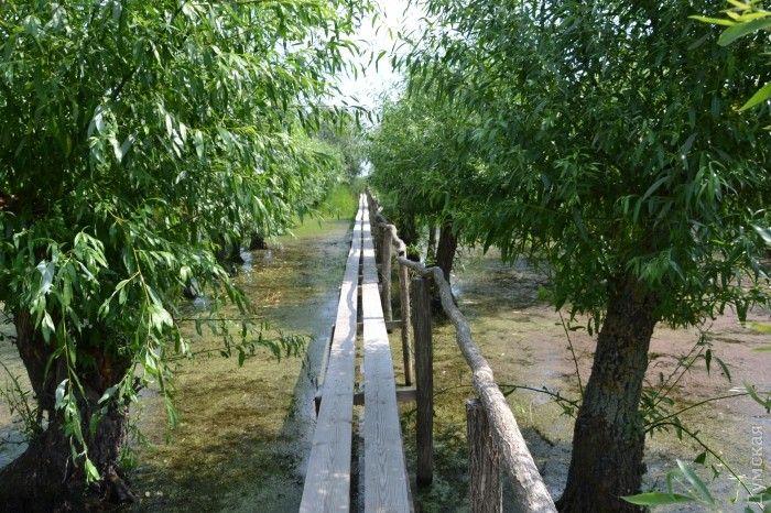 Для туристов в парке соорудили дорожки / фото Думская