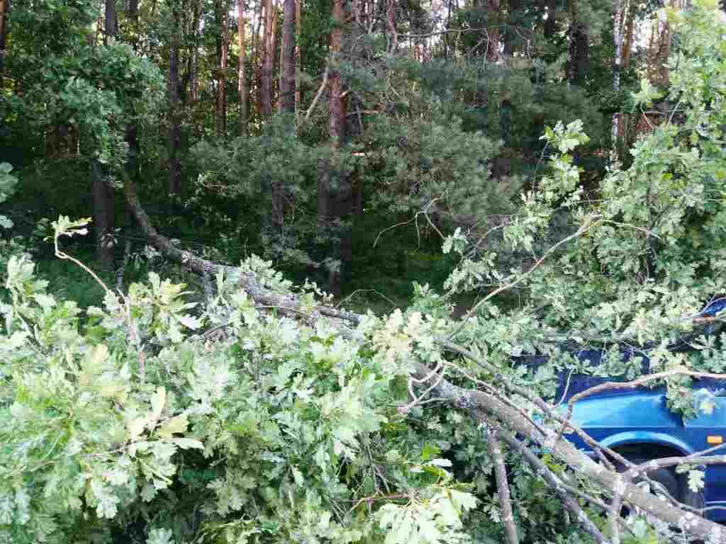 Дерево впало на проїжджу частину / ДСНС