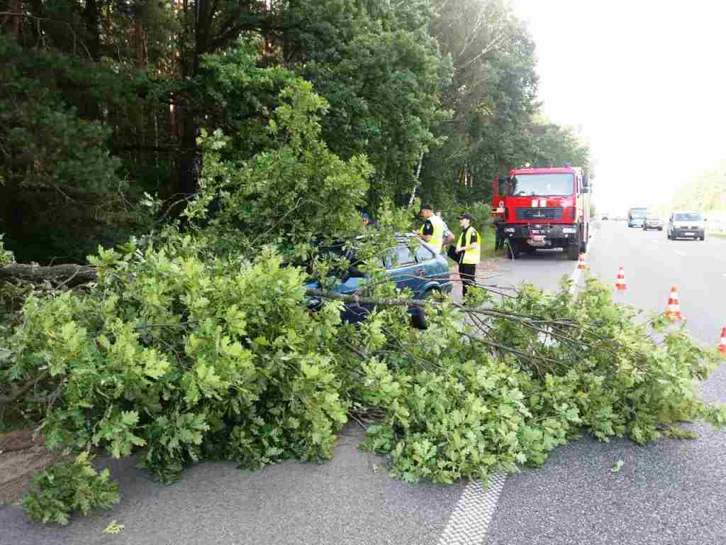 Спасатели оперативно убрали дерево / фото ГСЧС