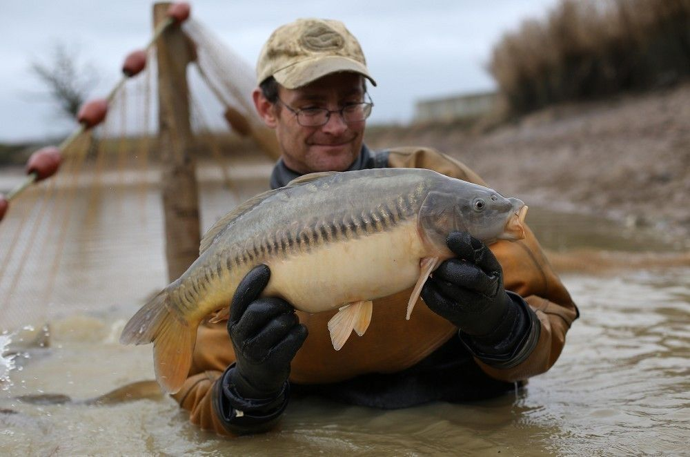 Згідно з дослідженням, самці риби стають менш агресивними / carpology.net