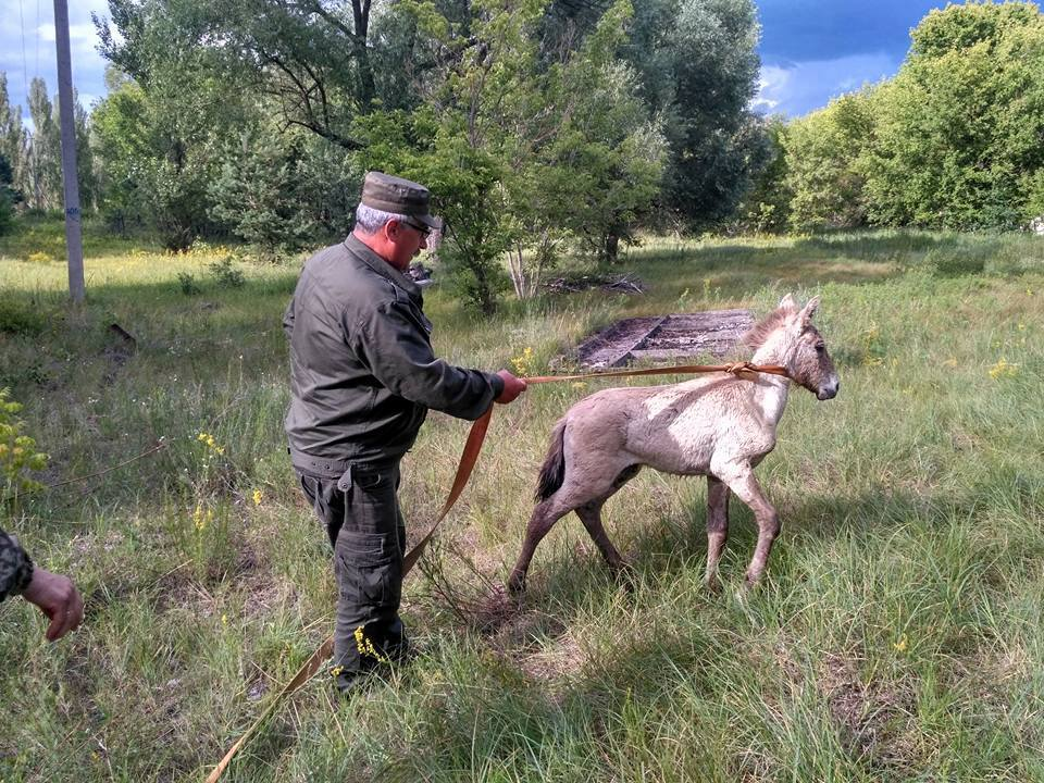 Врятований коник має повернутися до свого стада / Фото facebook.com/dazv.gov.ua
