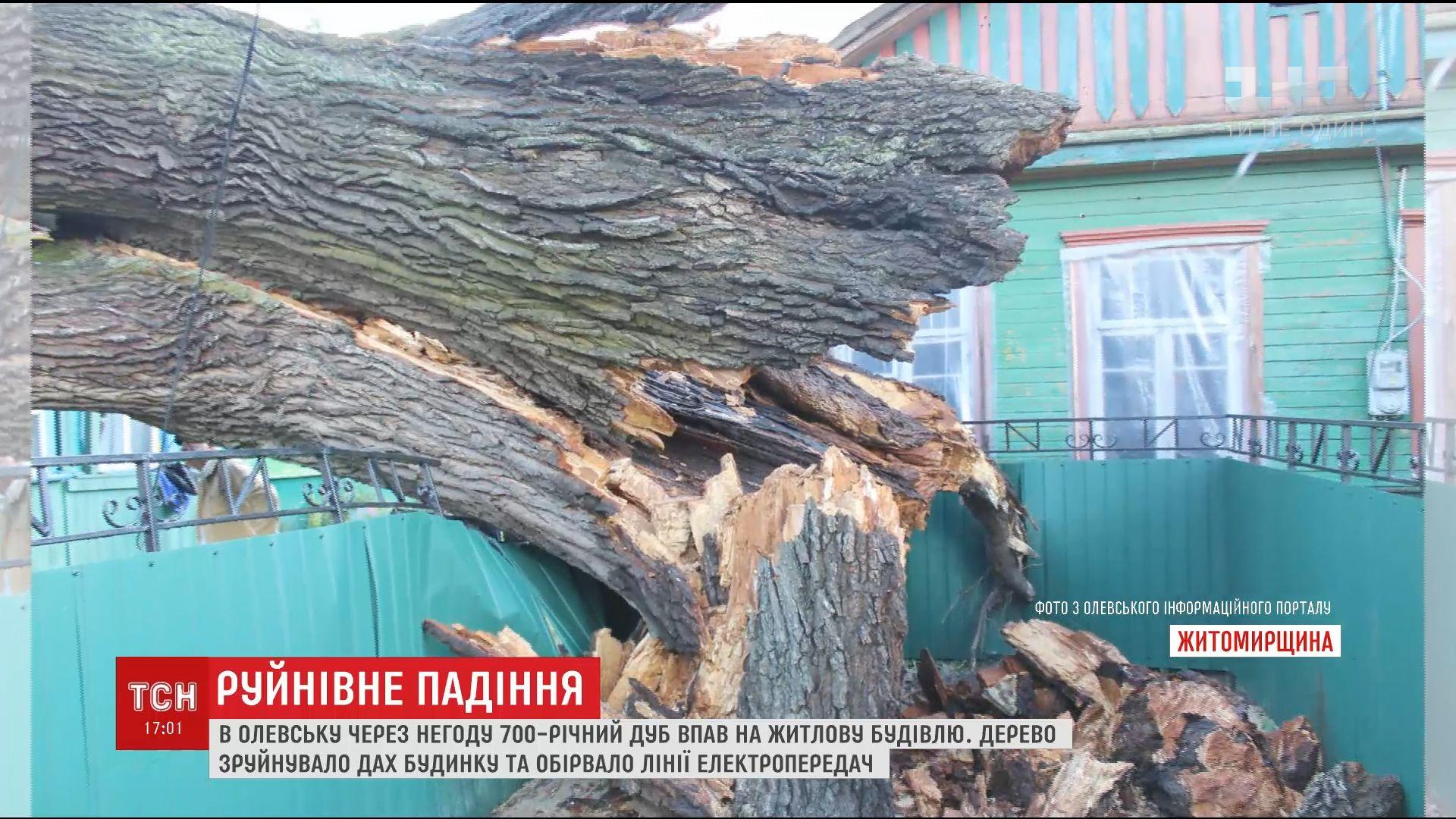 700-річний дуб упав на житловий будинок з-за урагану в Житомирській області /
