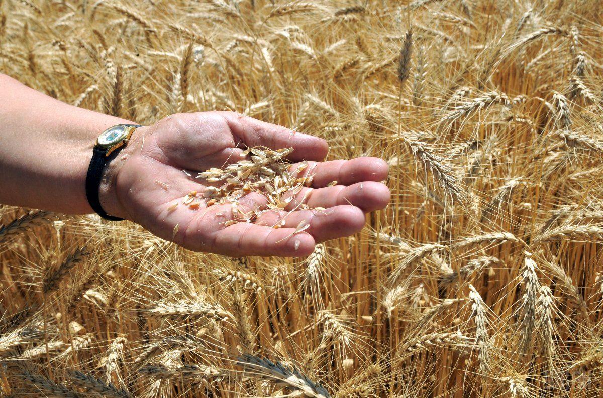 Ринки занервували через можливість того, що Україна обмежить експорт своєї пшениці / фото УНІАН