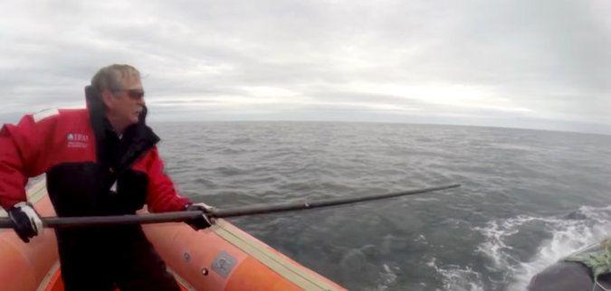 Канадский рыбак Джо Хаулетт / фото International Fund for Animal Welfare, via YouTube