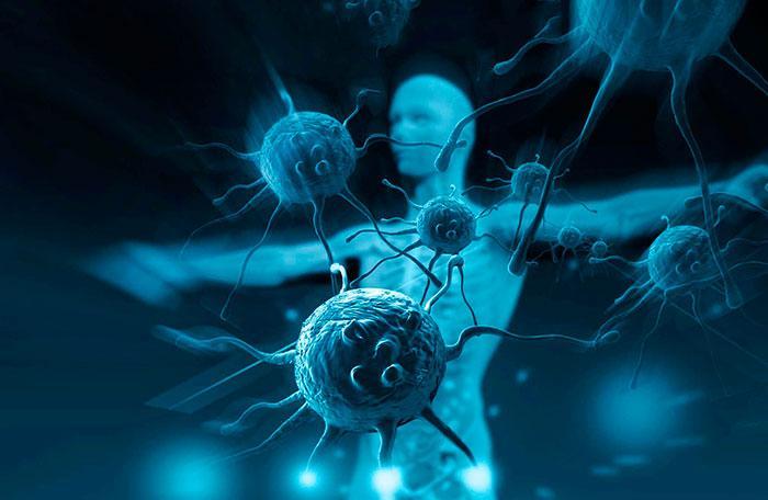 В иммунной системе человека есть определенный микро-орган / GoGetNews.info