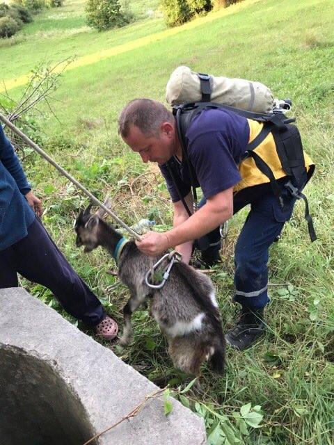 Порятунок козеня / фото ДСНС в Тернопільській області