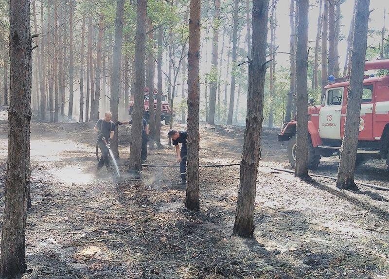 На Херсонщині горіло 19,5 га лісу / ДСНС