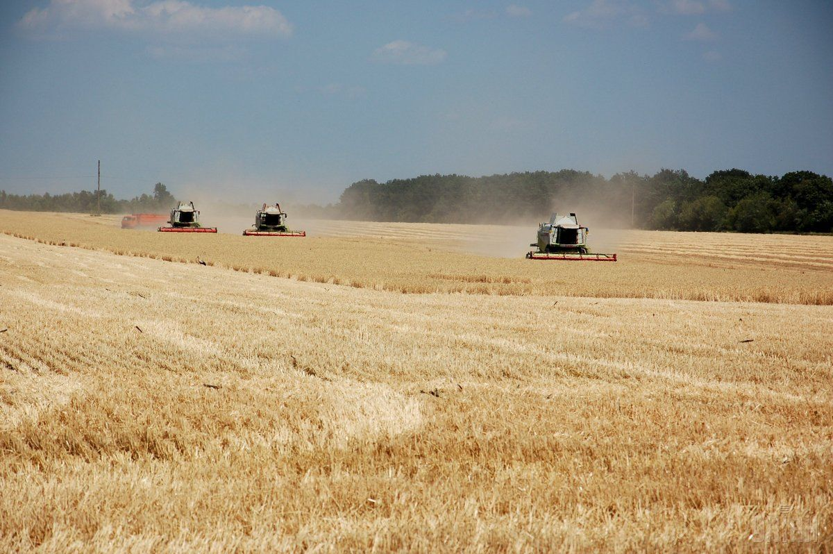 Фермерство може стати основою аграрного устрою України / фото УНІАН