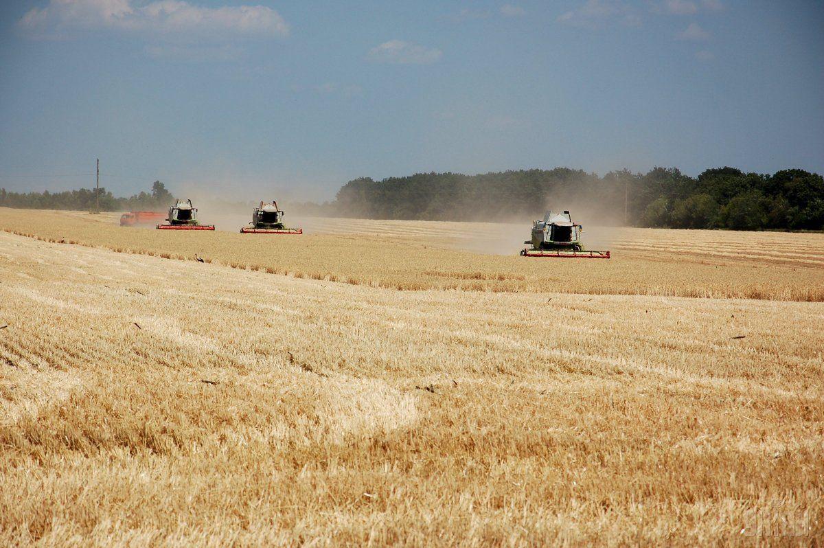 Урожайность зерновых превышает 32 центнера с гектара / фото УНИАН