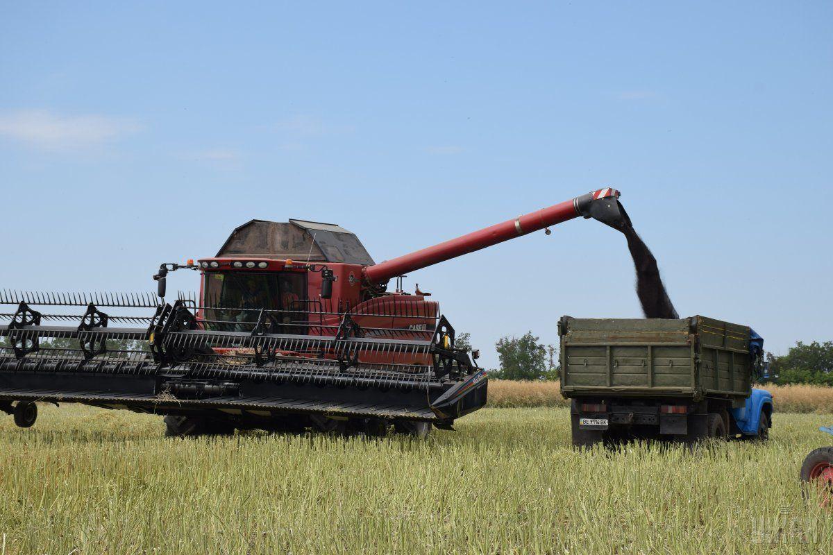 Середня врожайність зерна 38,9 ц/га / фото УНІАН