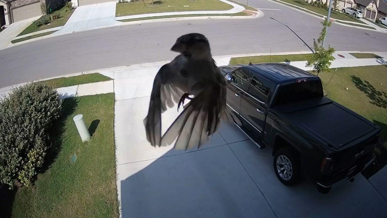 """Ефект стробоскопа: чому птахи, гелікоптери та гвинти літаків """"зависають"""" у повітрі під час зйомок"""