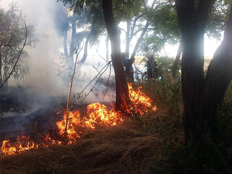 На Миколаївщині зберігається складна ситуація з пожежами / ДСНС