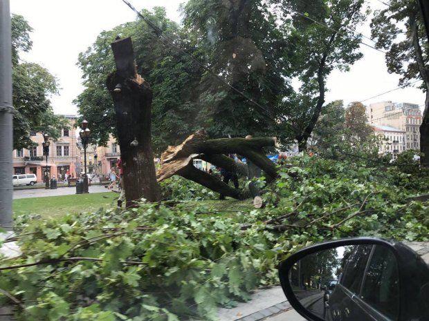 Негода у Львові / фото 24tv.ua