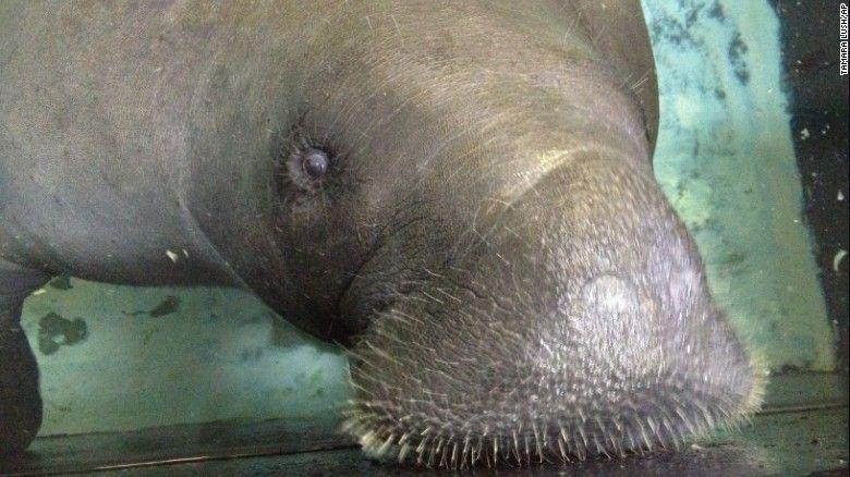 Тварину знайшли в підводному примі / фото edition.cnn.com