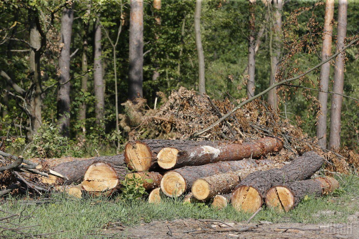 Мінекології пропонує дозволити екологічній інспекції перевіряти лісгоспи / фото УНІАН