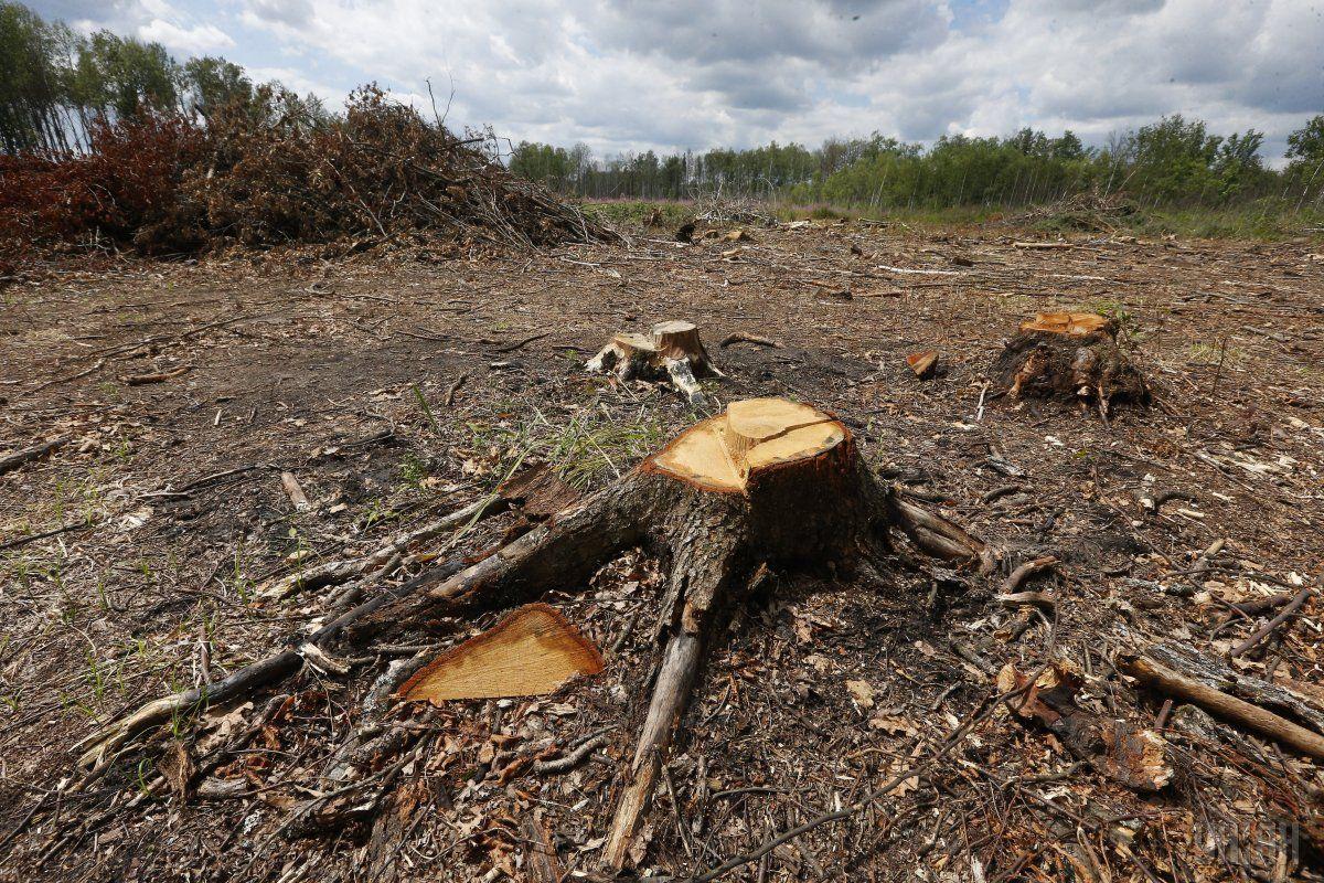 Корупціонер обіцяв зменшити компенсацію за вирубку дерев / Фото УНІАН