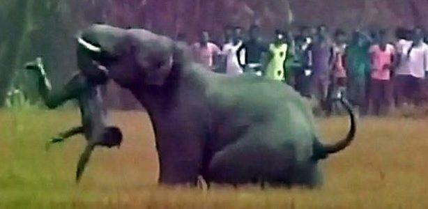 Слон сбил мужчину с ног хоботом, а затем проткнул его бивнем / фото ezega.com