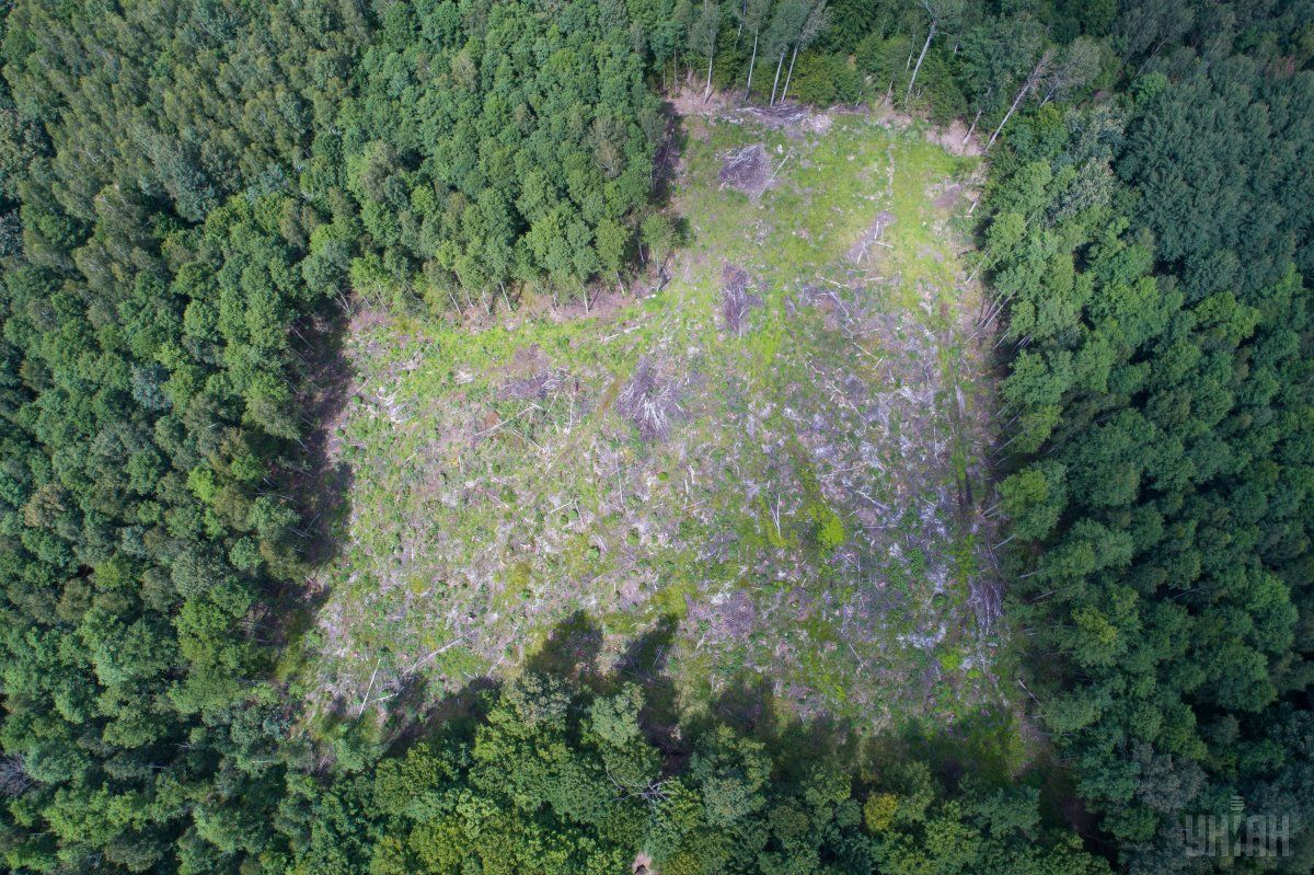 Вырубка леса в Украине / фото УНИАН