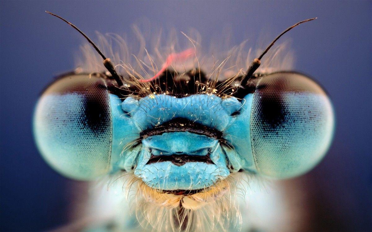 Ученые изучали стрекоз вида Hemicordulia / фото origins.org.ua