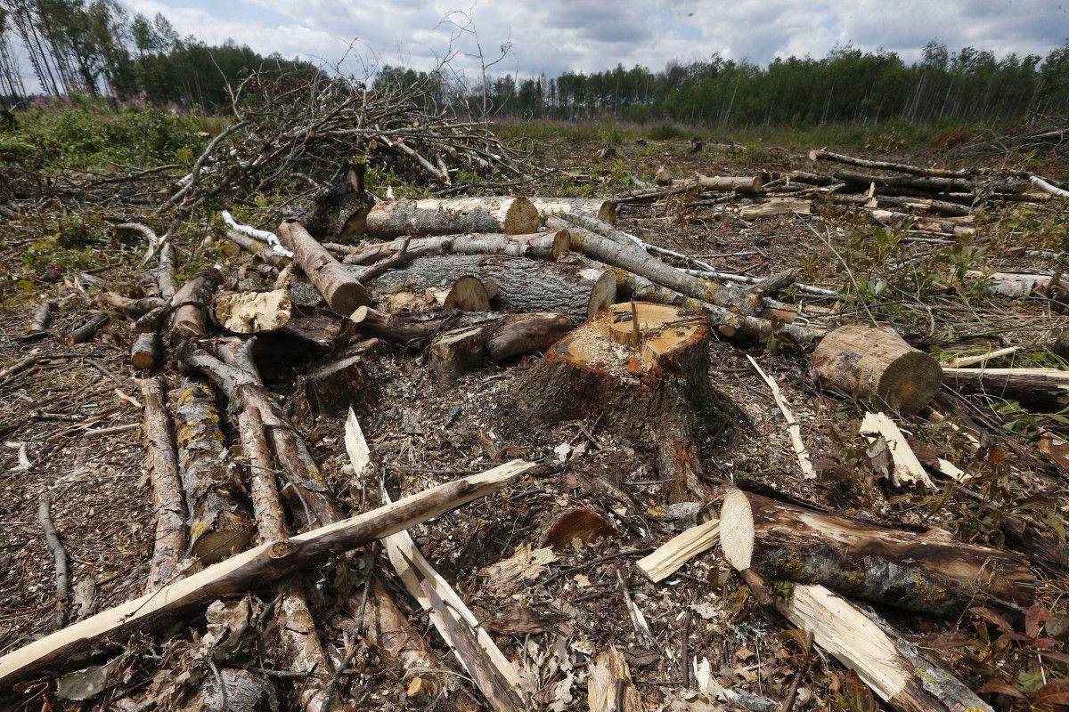 В Украине уничтожено, по оценкам экспертов, уже около 40% лесонасаждений / фото УНИАН