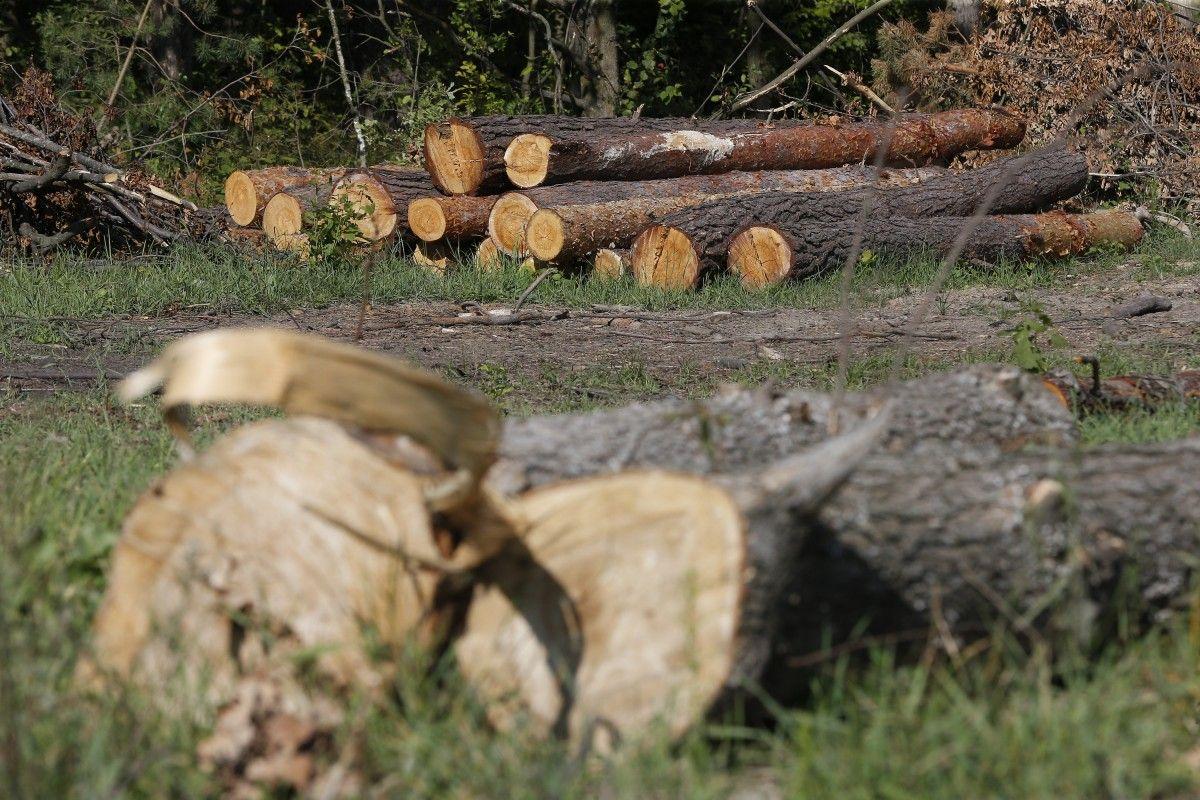 В 2016 году в Житомирской области зафиксированы 211 случаев незаконной заготовки древесины объемом 1992 кубометров / фото УНИАН