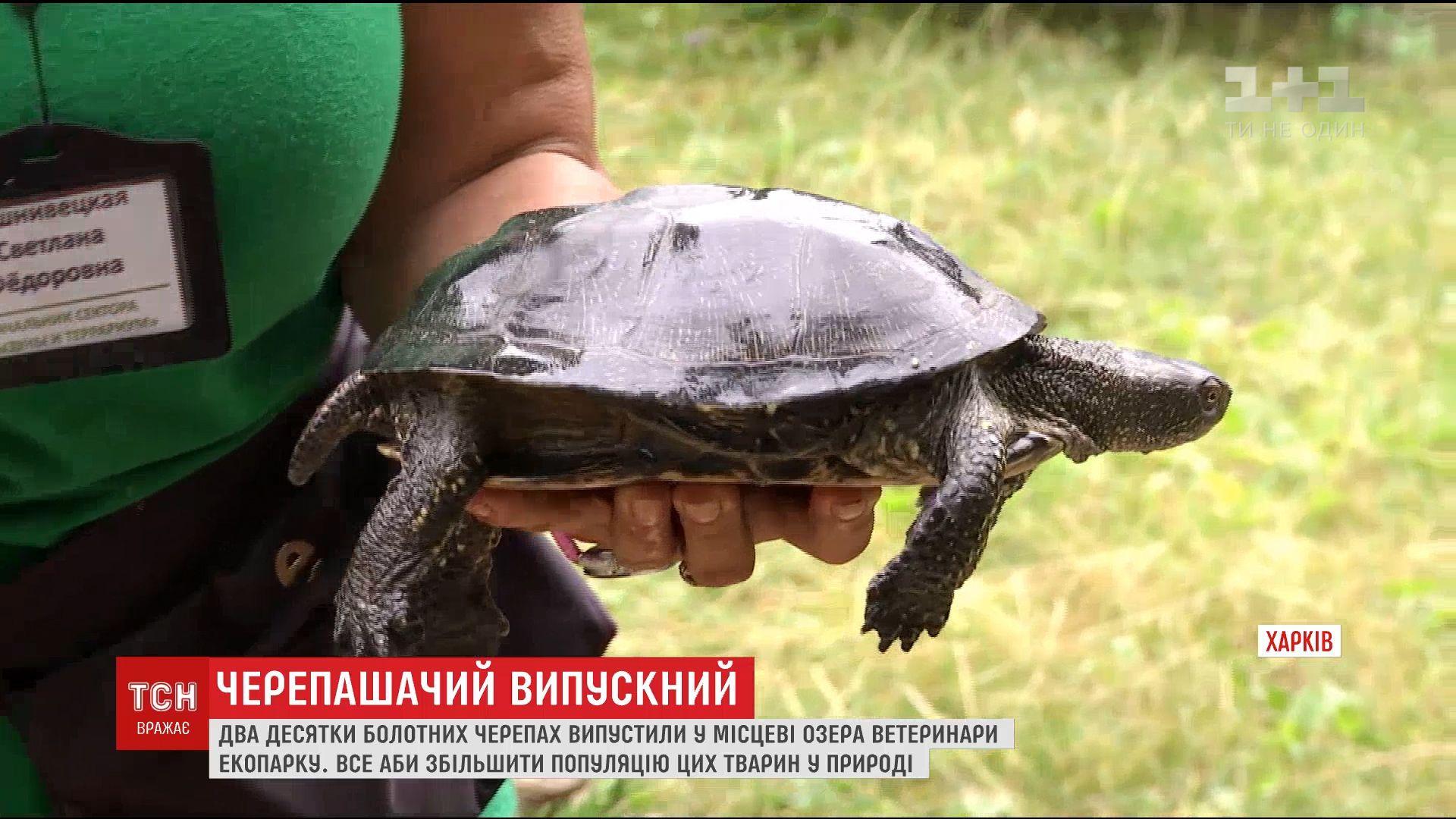В экопарке черепахи живут в искусственных озерах, где питаются только полезной пищей / скриншот