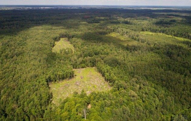Наслідки вирубки лісів на Житомирщині