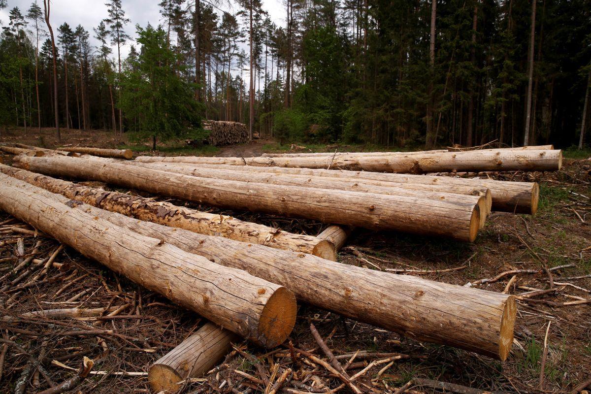Біловезька пуща врятована: Польща припинила вирубку дерев