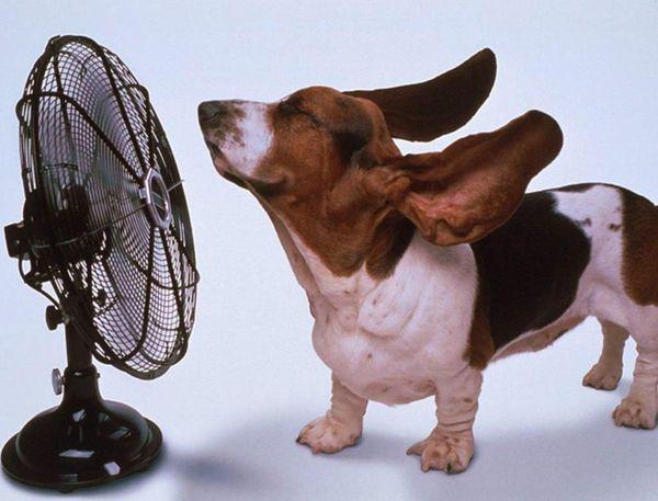 Собак у спеку порадує обливання з душу або шланга / фото 4lapy.by