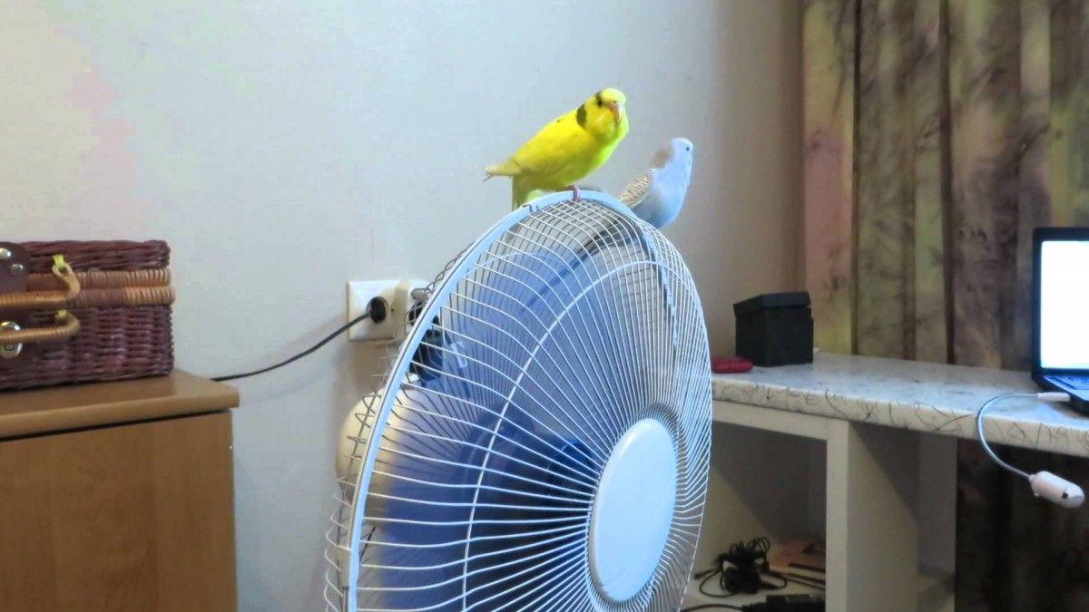 Папуги бояться протягів / фото YouTube