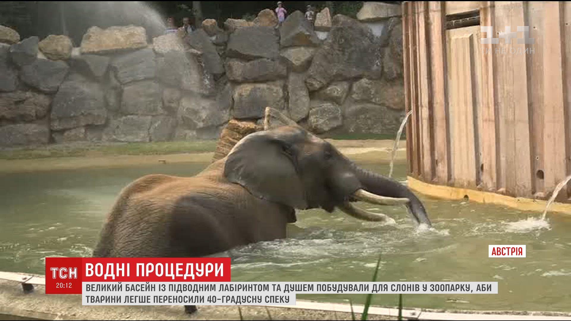 У головному звіринці Відня представили щойно відремонтований басейн / скріншот