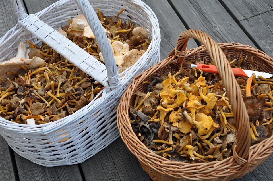 В Украине семья отравилась грибами / фото pixabay.com