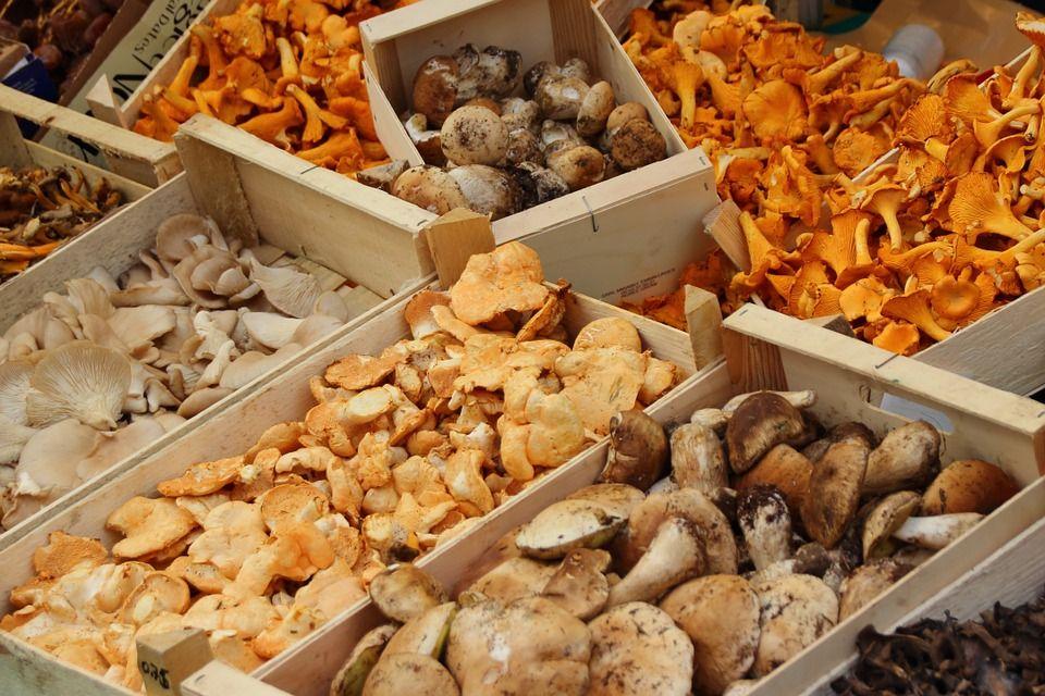 Съедобные грибы / фото pixabay.com