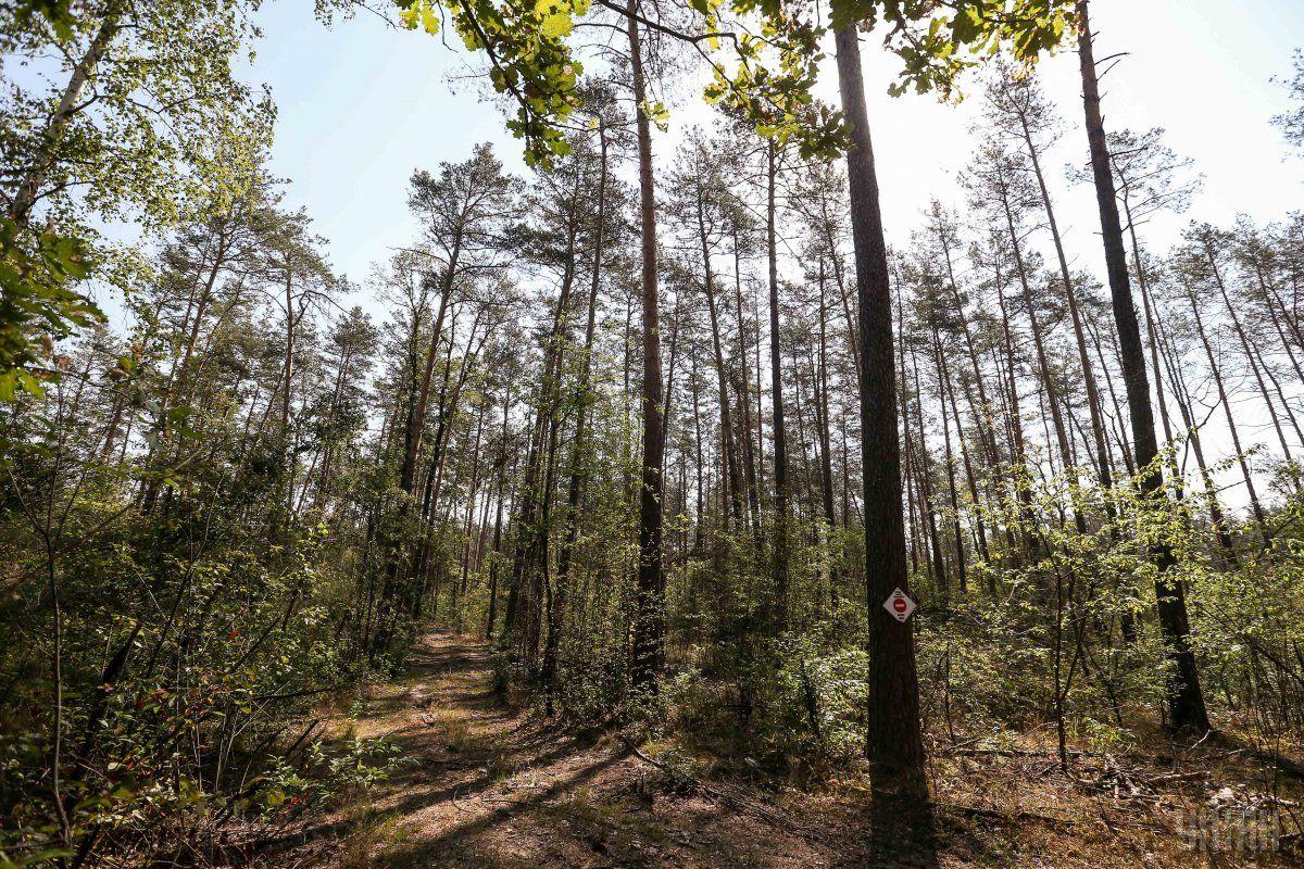 Закон посилює адміністративну та кримінальну відповідальність за порушення вимог збереження лісу / фото УНІАН