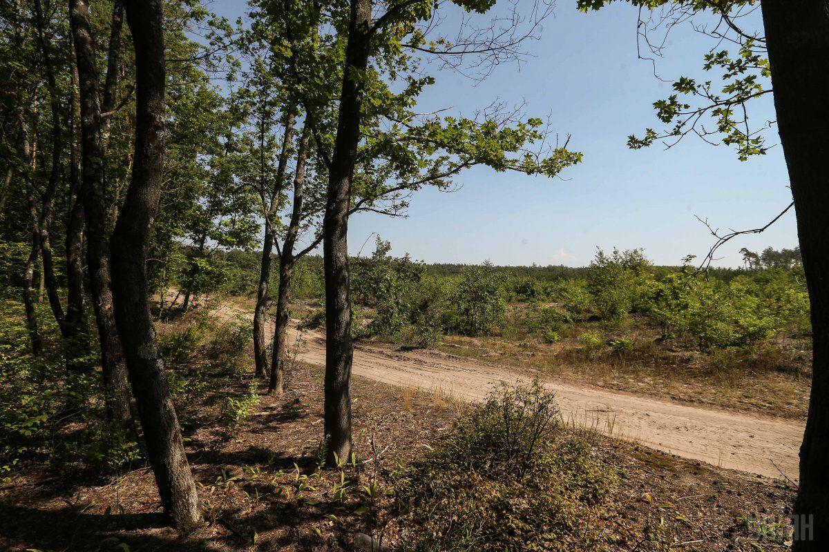 Почти 400 тысяч гектаров украинского леса высыхает / фото УНИАН